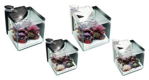 modelli newa more reef